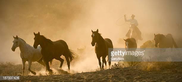 Cowboy chasing five running horses-arm raised,backlit dust