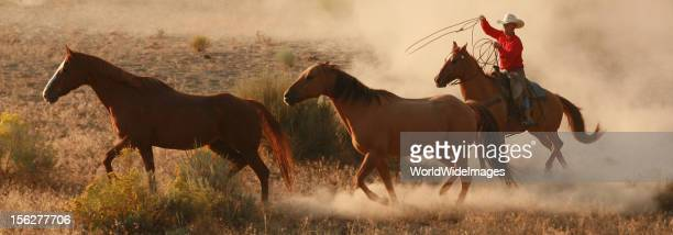 cowboy chasing horses at dawn