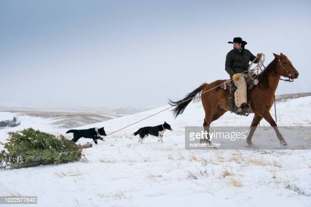 cowboy dragging christmas tree by horse - christmas horse stock pictures, royalty-free photos & images