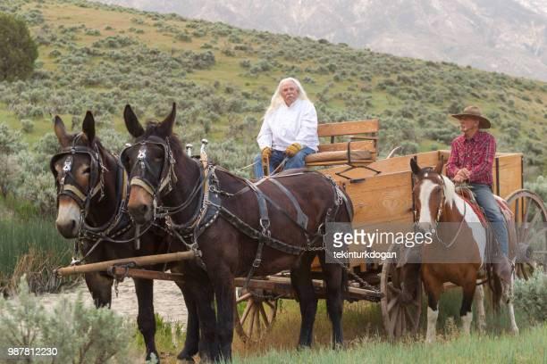 cowboy escort to horse carriage at santaquin valley of salt lake city slc utah usa - mula imagens e fotografias de stock