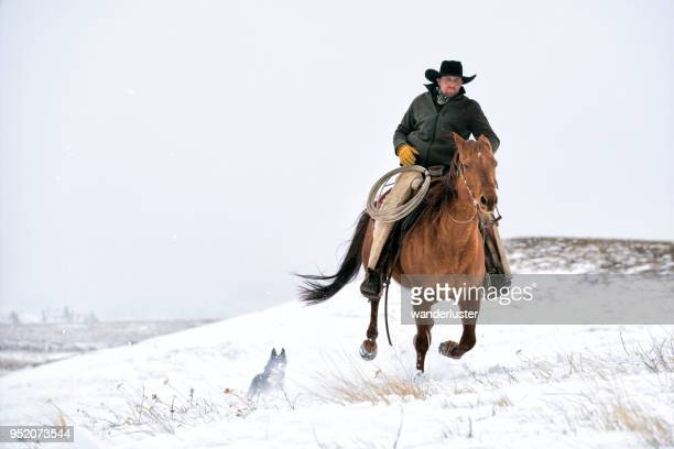 cowboy galloping across snowy mountain in montana - cowboy stock pictures, royalty-free photos & images