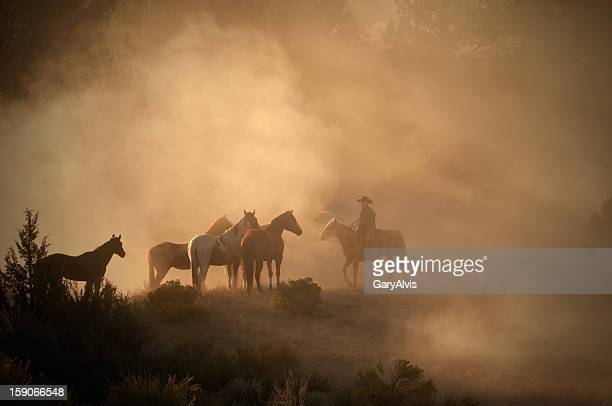 Cowboy herding horses early morning on high desert-back lit dust