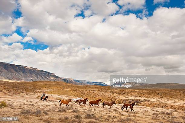 cowboy herding horses - wild west stock pictures, royalty-free photos & images