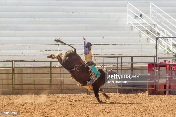 cowboy is at wild bull riding competition at  rodeo paddock arena at nephi of salt lake city slc utah usa - bull riding stock pictures, royalty-free photos & images