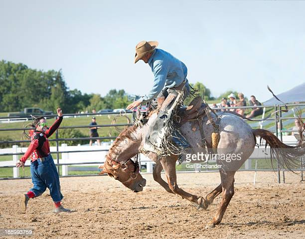 Cowboy is riding a bucking horse. The rhodeo clown is trying to direct the horse's attention. The horse is in a full buck, with his back arched. The...