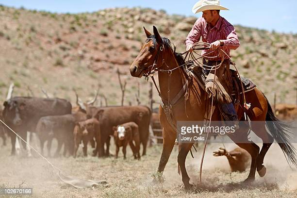 cowboy lassoing a calf while riding on his horse - rancher stock pictures, royalty-free photos & images