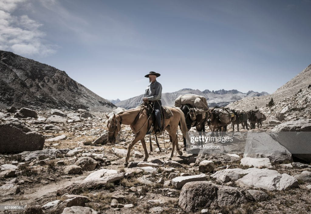 Cowboy leading mule train on the John Muir Trail : Stock Photo