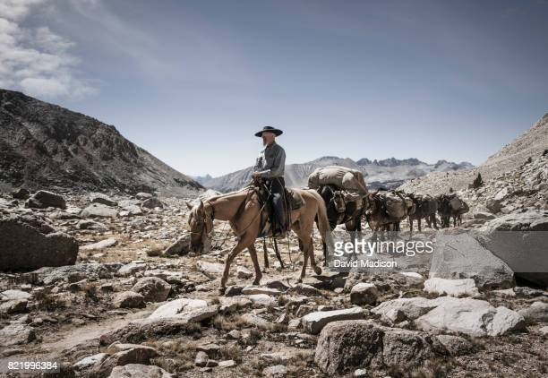 Cowboy leading mule train on the John Muir Trail