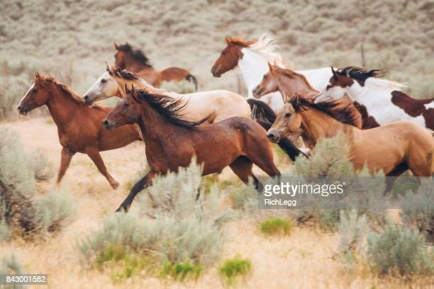 cowboy lifestyle in utah - horse stock pictures, royalty-free photos & images