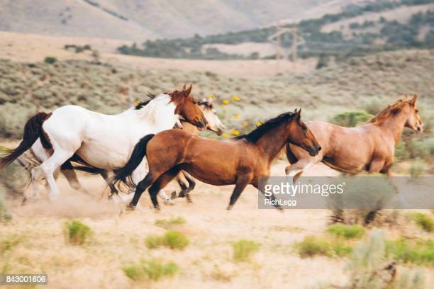 cowboy lifestyle in utah - rich_legg stock photos and pictures