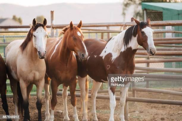 ユタ州のカウボーイ ライフ スタイル - 家畜柵 ストックフォトと画像