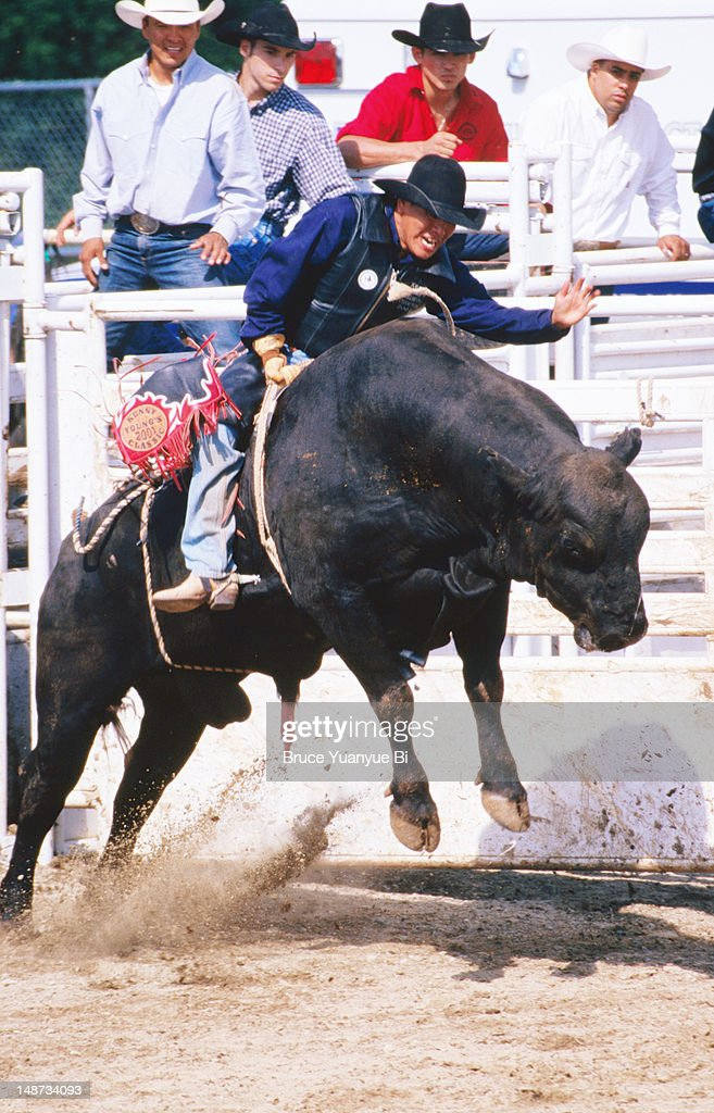 Cowboy On Angry Cows Back During Rodeo Competition At Mashantucket