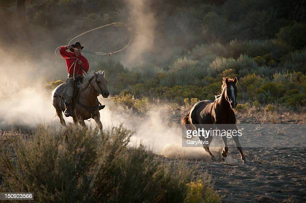 Cowboy on running hose, roping a wild stallion