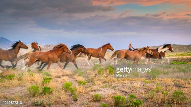 cowboy rancher bringing back home herd of young wild horses usa - ranch stock pictures, royalty-free photos & images