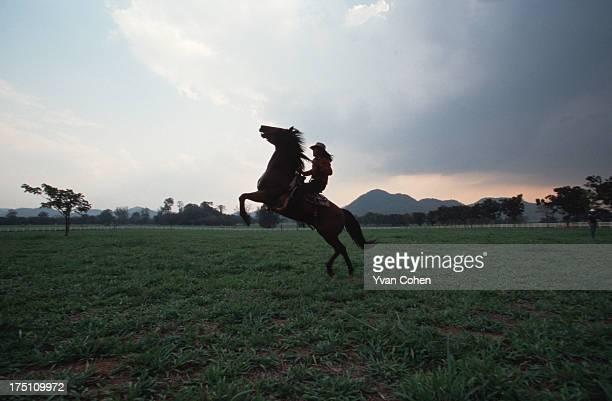 PAK CHONG SARABURI THAILAND A cowboy rearing up on his horse