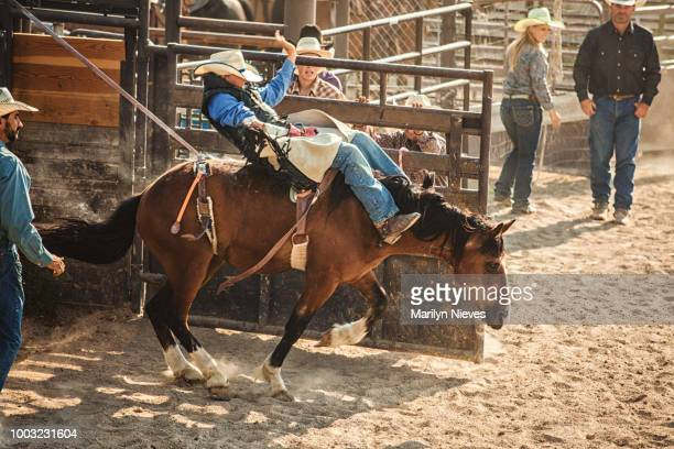 """cowboy riding a bucking bronco at a rodeo - """"marilyn nieves"""" stock pictures, royalty-free photos & images"""