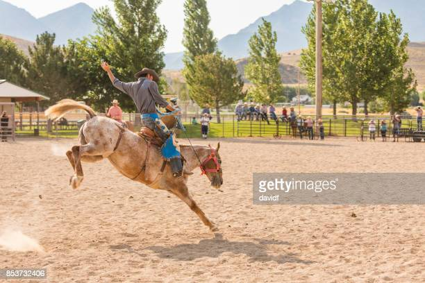cowboy riding a bucking bronco at a rodeo - bucking stock photos and pictures