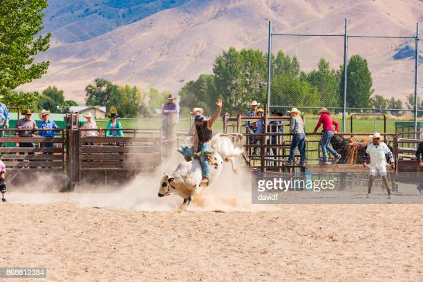 cowboy riding a bull at a rodeo - bull riding stock pictures, royalty-free photos & images