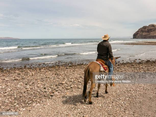 cowboy riding along the beach - mexican riding donkey stock photos and pictures