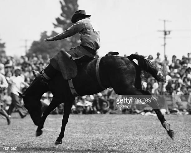 cowboy riding bucking horse - bronco stadium stock pictures, royalty-free photos & images