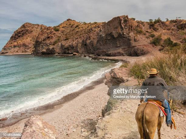 cowboy riding by sea of cortez - mexican riding donkey stock photos and pictures