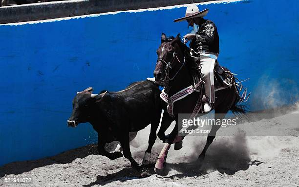 cowboy riding horse and herding bull at rodeo - hugh sitton stock pictures, royalty-free photos & images