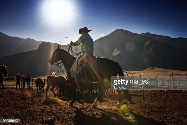 ユタ州の牧場での日の出に去勢を丸めカウボーイ - 家畜柵 ストックフォトと画像