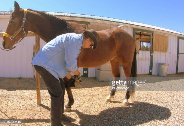 cowboy scraping out hooves - bluefootage stock pictures, royalty-free photos & images
