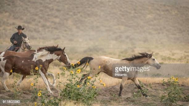 馬のランニングを監督するカウボーイ。