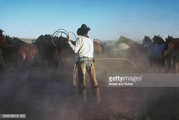 cowboy with lariat rounding up horses - 乗馬ズボン ストックフォトと画像