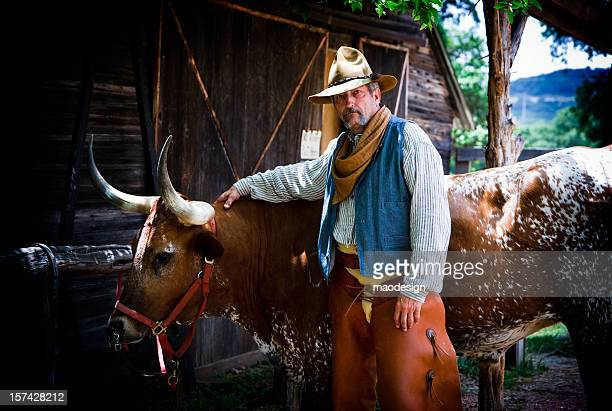 cowboy with longhorn - texas longhorn cattle stock photos and pictures