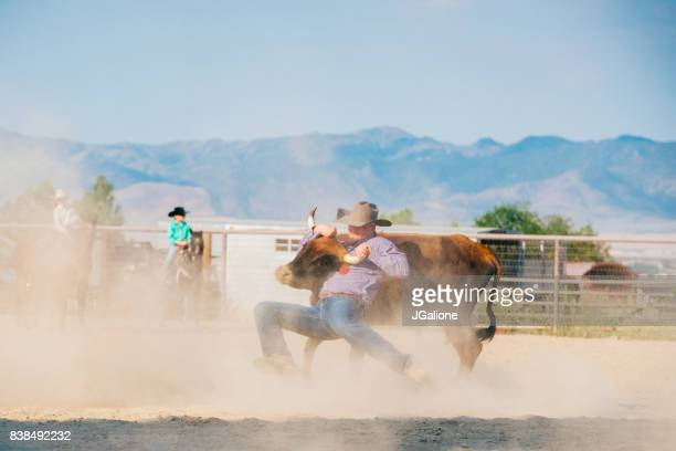 Cowboy Ringen mit einem Steer am Boden