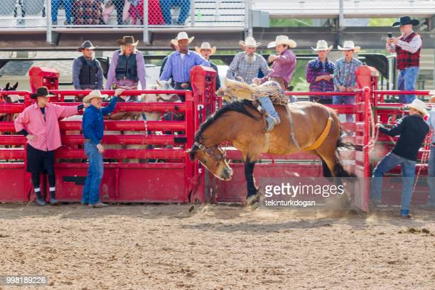 cowboys at wild horse riding competition
