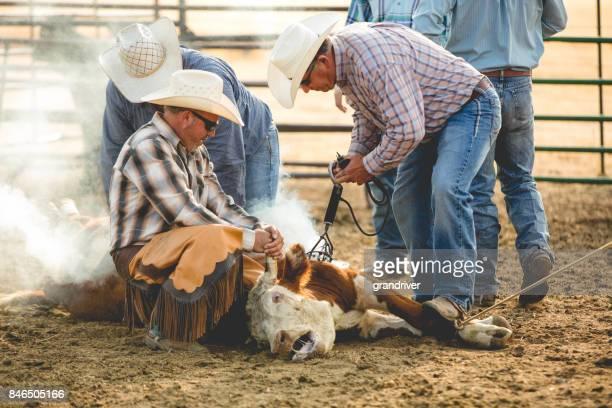 Cowboys Branding eine Kalb