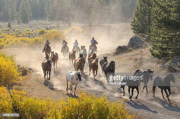 CONTENT] Cowboys bring the horses at a Montana ranch