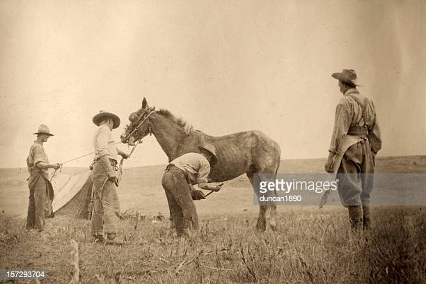 cowboys - history stock pictures, royalty-free photos & images