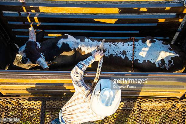 Cowboys preparing at rodeo, Texas
