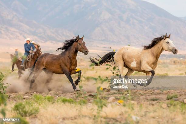 Cowboys Running Horses in the Country