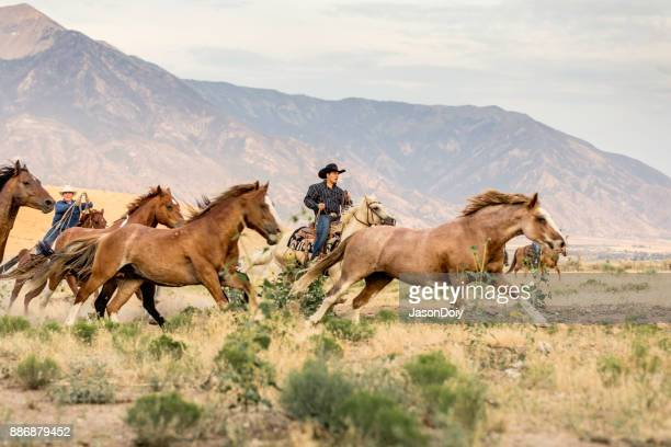 cowboys running horses in the country - appaloosa stock pictures, royalty-free photos & images