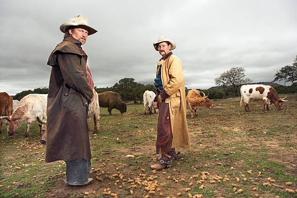 Cowboys with cattle