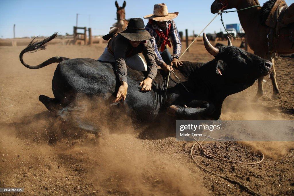 Amazon Cowboys Maintain Brazilian Cattle Feed Lot : News Photo
