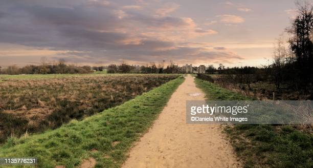 cowdray ruins - cowdray park stock pictures, royalty-free photos & images