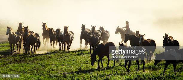 Cowgirl leading horse herd to corral at end of day