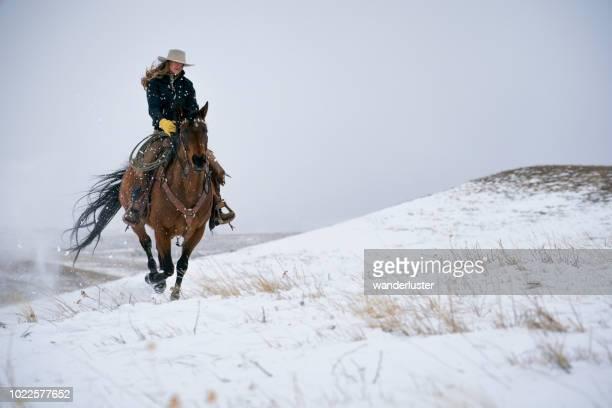 cheval d'équitation cow-girl dans absaroka en hiver - cowgirl photos et images de collection