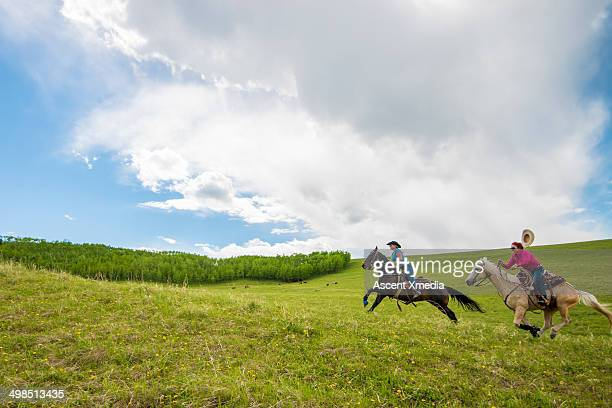 Cowgirls race across open rangeland, cattle behind