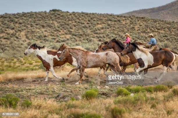 cowgirls running horses in the country - appaloosa stock pictures, royalty-free photos & images