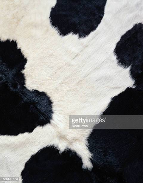 cowhide - cowhide stock photos and pictures