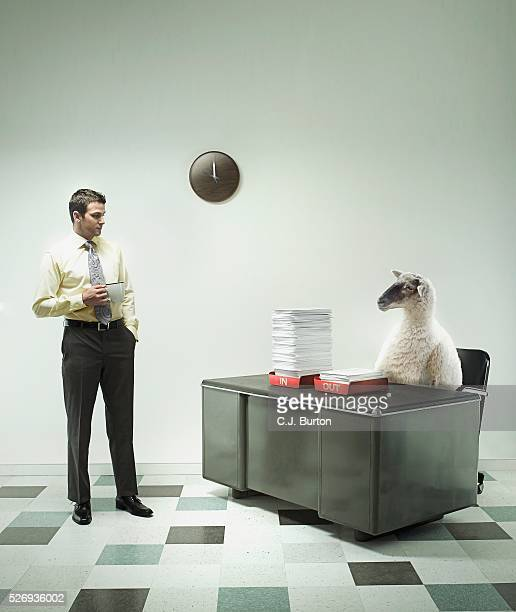 Co-worker Looking at Sheep Sitting at Desk