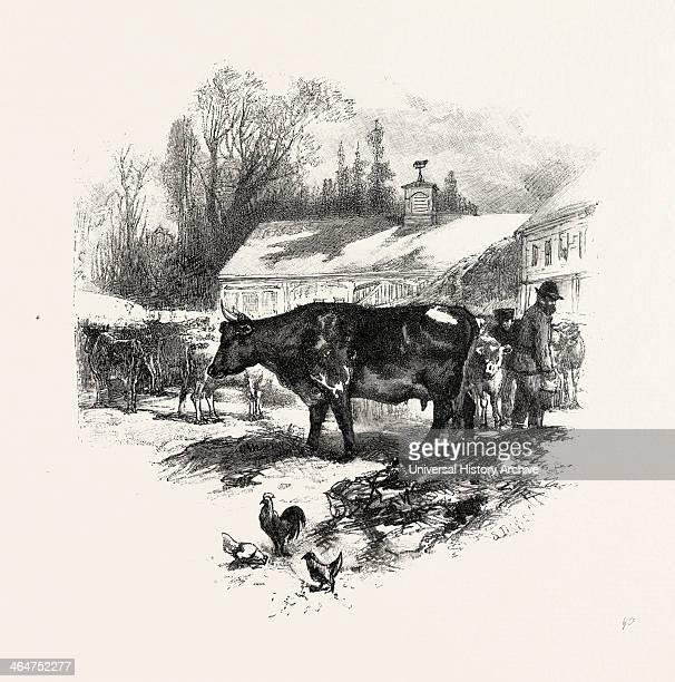 Cows Farm Canada Nineteenth Century Engraving