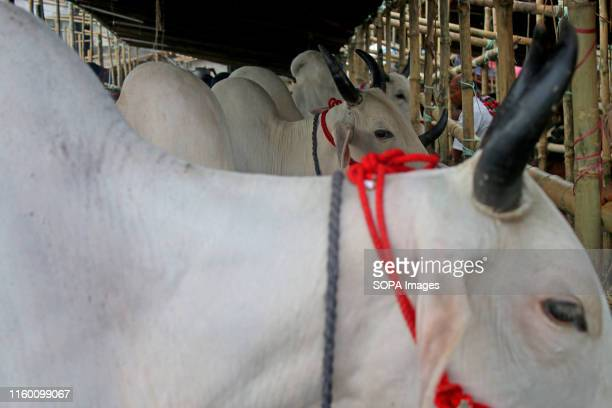 Cows for sale are seen at a cattle market in Dhaka Muslims across the world celebrate the annual festival of Eid alAdha or the Festival of Sacrifice...